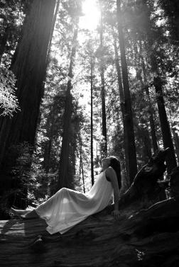 Redwoods K 1694 bw